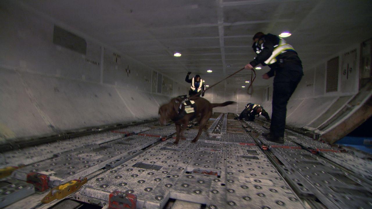 Mit Hilfe eines speziell ausgebildeten Spürhundes durchsuchen Grenzbeamte den verdächtigen Frachtraum eines Passagierflugzeuges. - Bildquelle: Force Four Entertainment / BST Media 2 Inc.