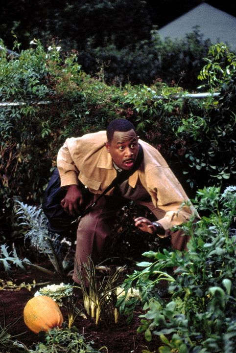 Der skurrile FBI - Agent Malcolm (Martin Lawrence) hegt einen ungewöhnlichen Plan ... - Bildquelle: 20th Century Fox