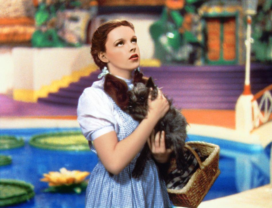 Die kleine Dorothy (Judy Garland) aus Kansas landet nach einem Wirbelsturm mitsamt ihrem Hund Toto in dem magischen Land Oz hinter dem Regenbogen ... - Bildquelle: Warner Bros.