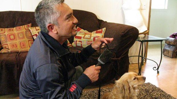 Cesar Millan (Bild) hilft heute unter anderem Johnny und Chandra, die große P...