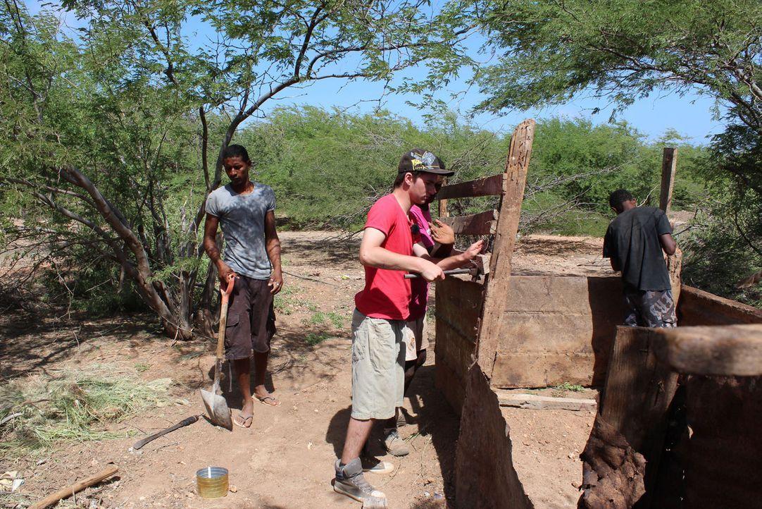 Timmy (M.) muss bei der Renovierung des Schweinestalls helfen. - Bildquelle: kabel eins