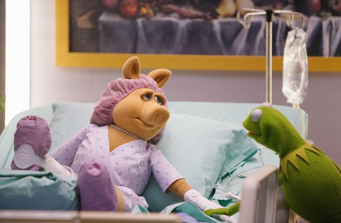 Als Miss Piggy (l.) sich bei den Proben für eine Tanzeinlage das Bein bricht, beschließt Kermit (r.), ihre Show aus dem Krankenhaus zu senden. Doch... - Bildquelle: ABC Studios