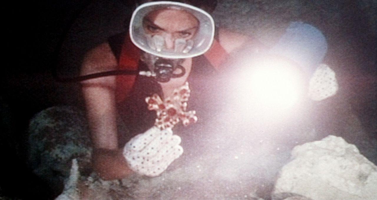 Zusammen mit ihrem frisch engetrauten Mann verbringt Gail (Jacqueline Bisset) ihre Flitterwochen auf den Bermudas. Beim Tauchen macht sie einen sens... - Bildquelle: Columbia Pictures