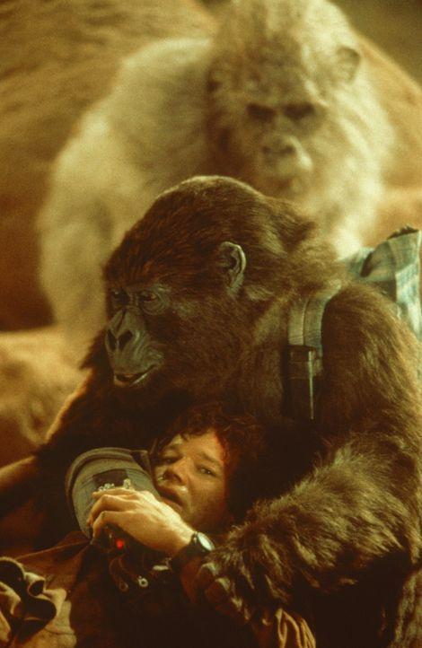 Die zivilisierte Amy versucht, den Primatologen Peter Elliot (Dylan Walsh) vor ihren aggressiven, freilebenden Artgenossen zu schützen ... - Bildquelle: Paramount Pictures