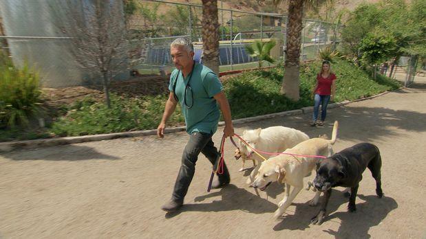 Cesar Millan - Der Hundeflüsterer - Holly (r.) ist begeistert, als sie sieht,...