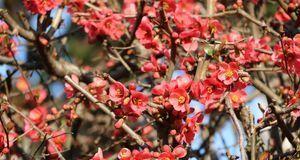 Gartengestaltung_2016_05_10_pflegeleichter Garten_Bild 2_fotolia_ClaraNila