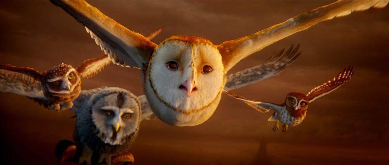 Als Soren (2.v.r.) und Gylfie (r.) auf ihrer Flucht den Bartkauz Morgengrau (2.v.l.) und den Höhlenkauz Digger (l.) kennenlernen, machen sie sich ge... - Bildquelle: Warner Brothers