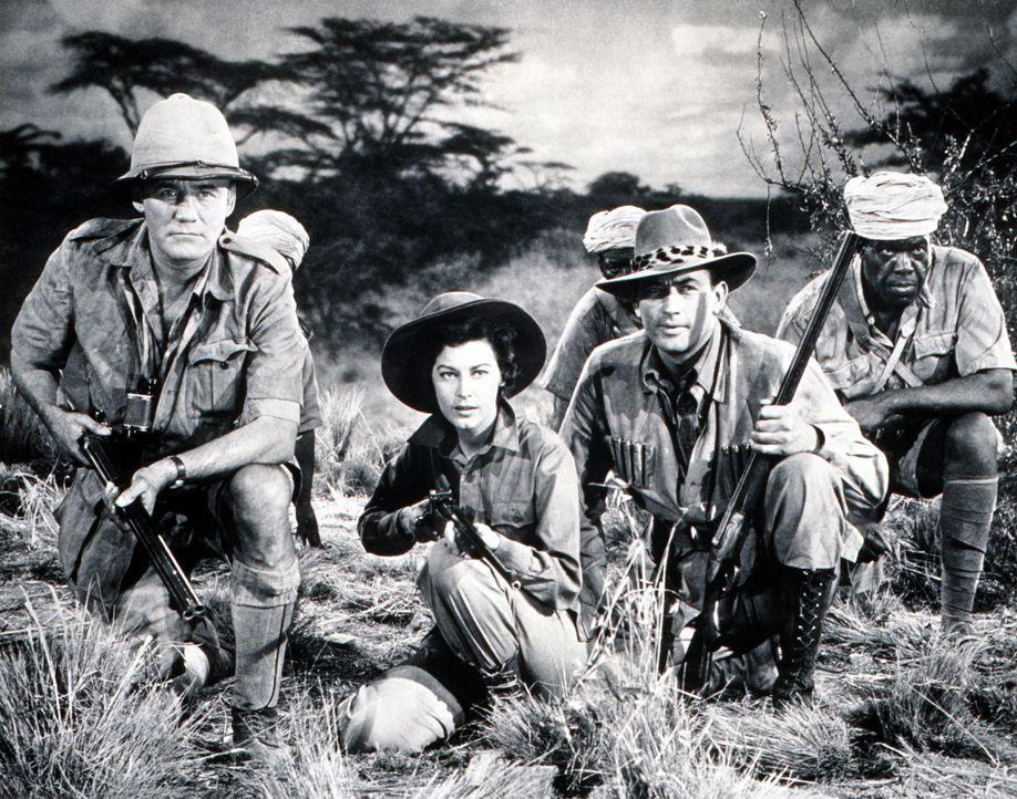 Begeben sich auf eine Safari in Afrika unter den wachsamen Augen von Johnson (Torin Thatcher, l.): der Schriftsteller und Globetrotter Harry Street... - Bildquelle: 1952 Twentieth Century Fox Film Corporation.
