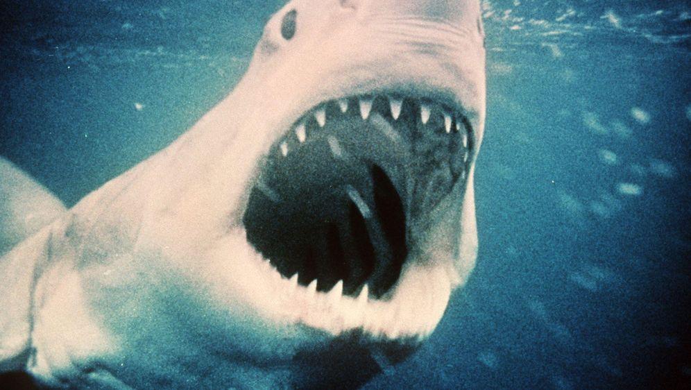 Was tun bei einem Hai-Angriff - Bildquelle: dpa