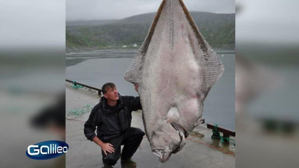 Riesenfisch