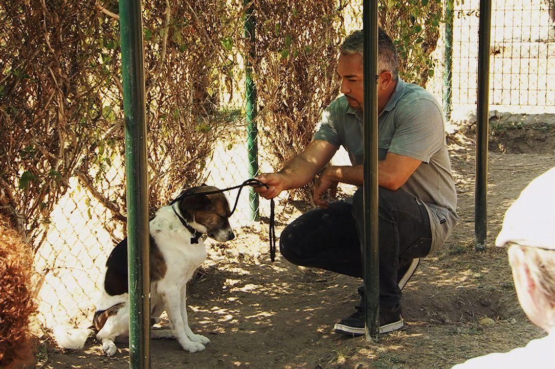 Der Mischlingshund Brigadiere ist erst seit kurzem im Tierheim. Er ist völlig verschüchtert und ängstlich, traut sich kaum aus seinem Käfig heraus.... - Bildquelle: Belén Ruiz Lanzas 360 Powwow, LLC / Belén Ruiz Lanzas