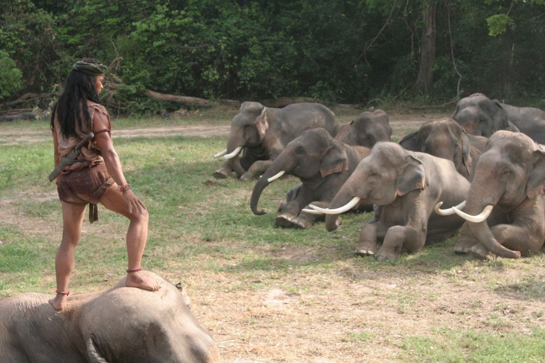 Auch die Elefanten liegen ihm Füßen: Tien (Tony Jaa) ... - Bildquelle: Splendid Film