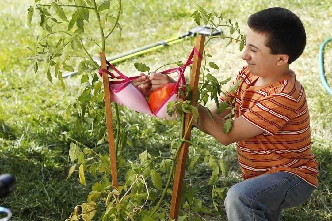 Während Brick (Atticus Shaffer) den Sommer über eine Tomate züchten will, möchte Sue mehr Zeit mit ihrem Vater verbringen. Dieser löst nämlich große... - Bildquelle: Warner Brothers