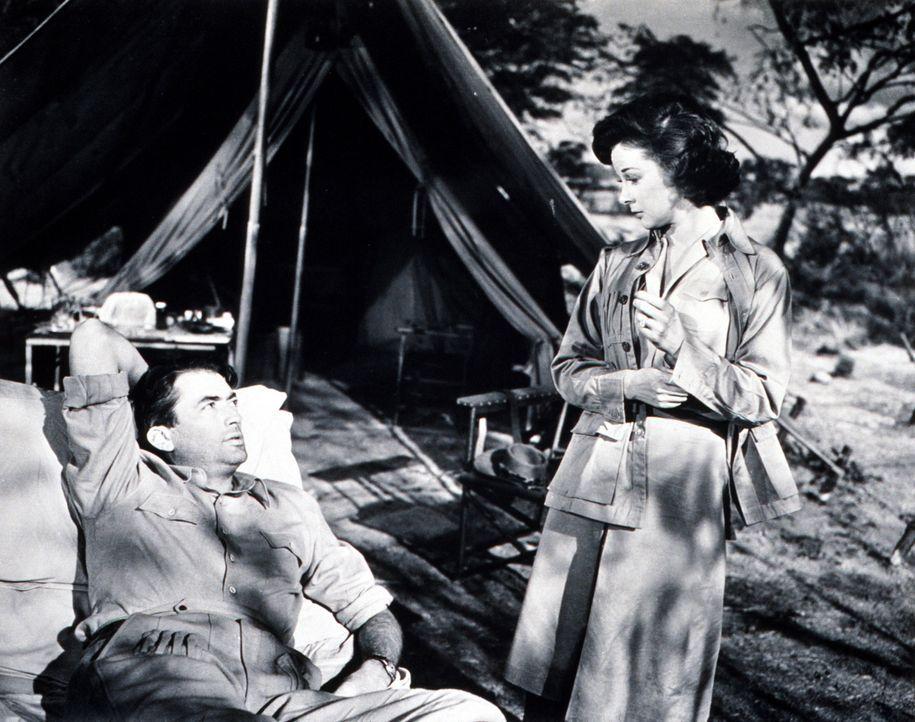 Vom Wundfieber geschüttelt, lässt Globetrotter Harry Street (Gregory Peck, l.) sein Leben Revue passieren. An seiner Seite wacht Helen (Susan Haywar... - Bildquelle: 1952 Twentieth Century Fox Film Corporation.