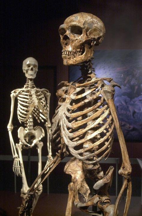 Weltweit sind Erzählungen von Beziehungen zwischen Menschen und Außerirdischen verbreitet. Die Entschlüsselung des Erbguts zeigt, dass die menschlic... - Bildquelle: Associated Press