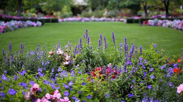 pflegeleichter garten: tipps für hobby-gärtner | sat.1 ratgeber, Gartengerate ideen