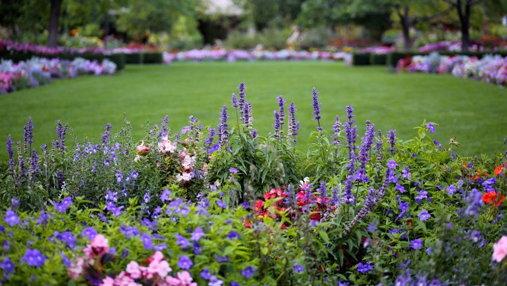 Pflegeleichter Garten Tipps Fur Hobby Gartner Sat 1 Ratgeber