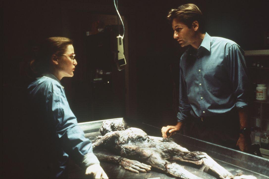 Die studierte Medizinerin Scully (Gillian Anderson, l.) glaubt nur an wissenschaftliche Beweise. Mulder (David Duchovny, r.) aber ist der festen Übe... - Bildquelle: TM +   Twentieth Century Fox Film Corporation. All Rights Reserved.