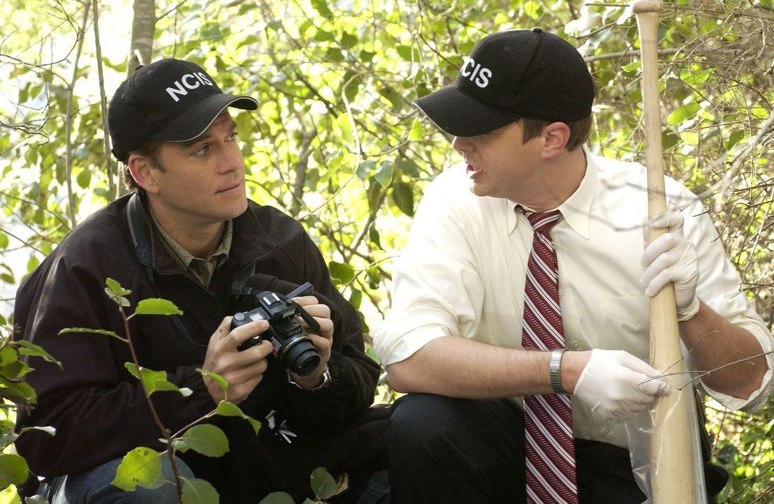 McGee (Sean Murray, r.) und Tony (Michael Weatherly, l.) finden einen Hinweis, der den Mord an William Moore bestätigt ... - Bildquelle: CBS Television