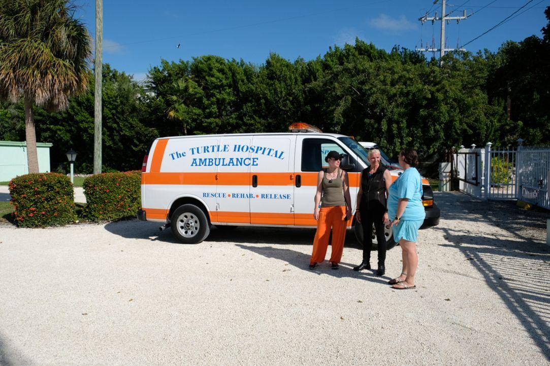 Bei einem Besuch im Schildkröten Krankenhaus kommen bei Becki (l.) und Carmen (M.) Erinnerungen hoch ... - Bildquelle: kabel eins