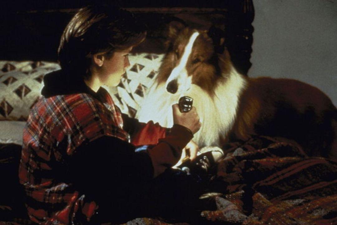 Erst als dem jungen Matt (Tom Guiry) die Collie-Hündin Lassie zuläuft, gewinnt er wieder Freude am Leben ... - Bildquelle: Paramount Pictures