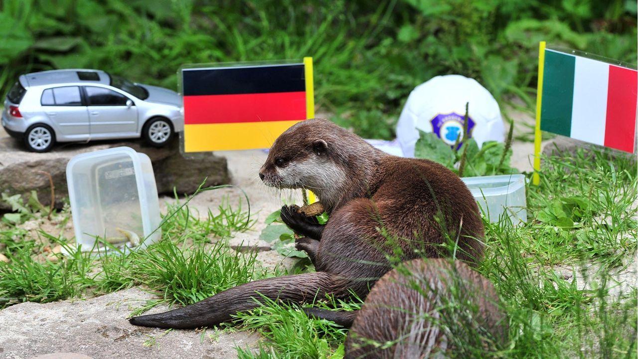 Otterdame_Ferret