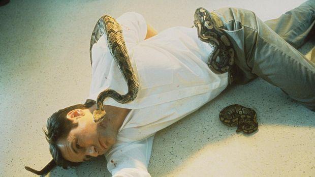Ein junger Mann stirbt an zahlreichen Klapperschlangenbissen. Mulder (David D...