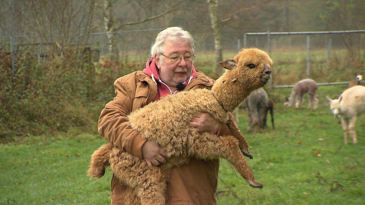 Peter Bischoff züchtet auf seiner Farm in Thüringen Alpakas. Wir durften beim Deckakt und bei der Geburt der südamerikanischen Kamelart dabei sein .... - Bildquelle: SAT.1