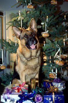 Kommissar Rex - Ein Weihnachtsbaum voller Semmeln. Das ist doch endlich mal e...