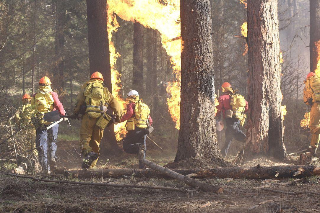 Feuer im ältesten Nationalpark Amerikas, des Yellowstone National Parks. Tausende Touristen werden von einem riesigen Flammenherd eingeschlossen. Ei...