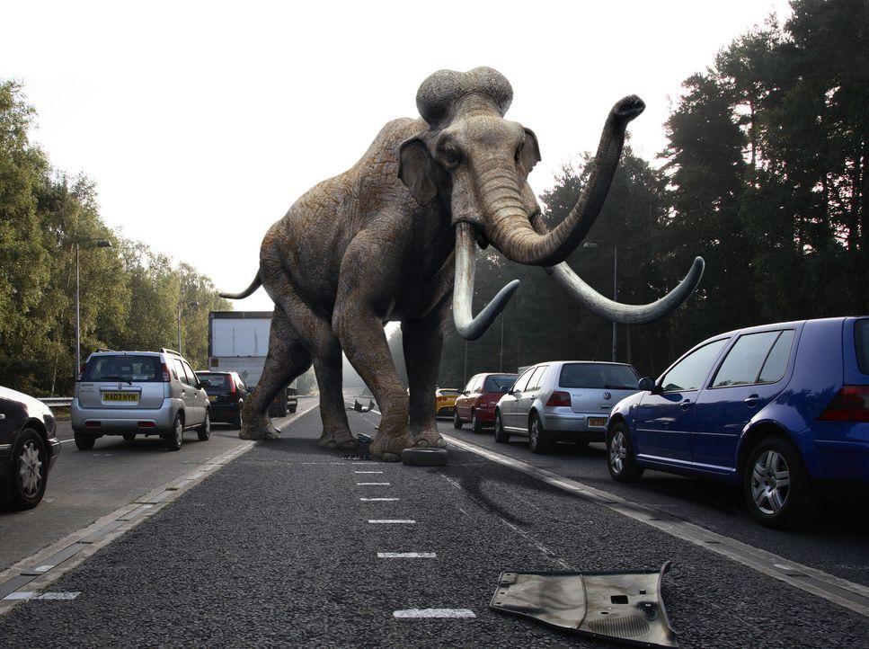 Ein Mammut sorgt für große Aufregung ... - Bildquelle: ITV Plc