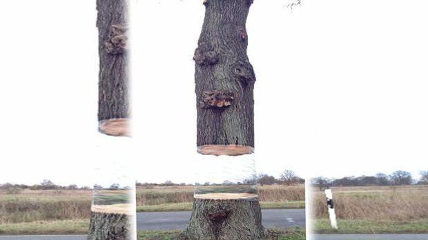 Webphänomen Schwebender Baum