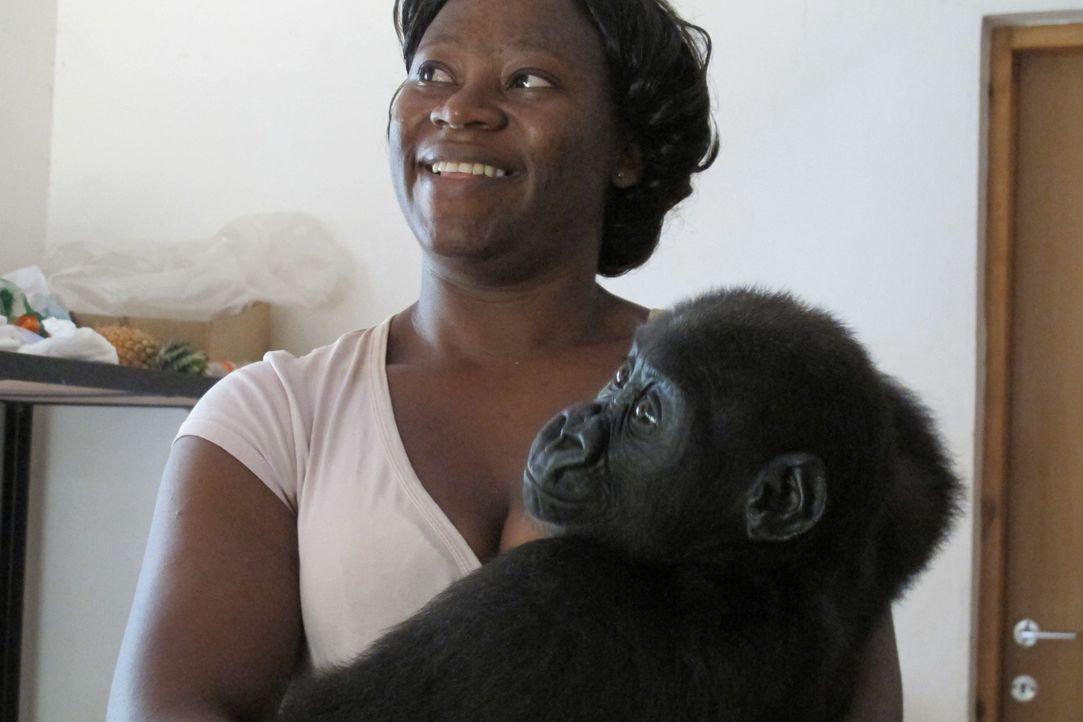 Rachel Hogan und Jeanne Mewundo (Bild) bekämpfen den Fleischhandel in Kamerun und kümmern sich aufopferungsvoll um verwaiste Affen und Gorillas im M... - Bildquelle: Quicksilver Media 2012