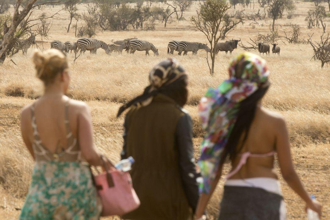 Reality Queens auf Safari ... - Bildquelle: Guido Ohlenbostel ProSieben