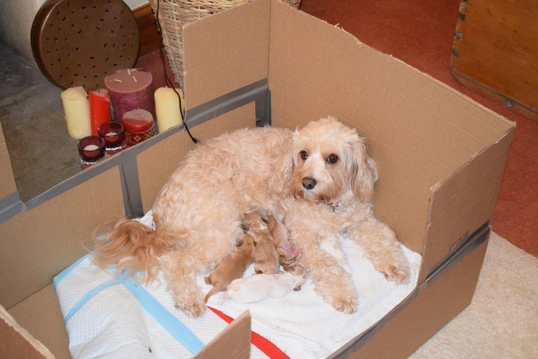Süße Hundewelpen und ein Kater auf Diät - Bildquelle: True North