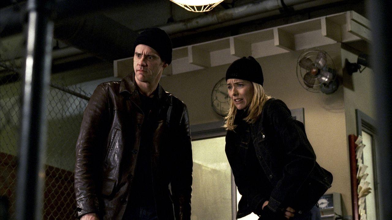 Um ihren Lebensstandard zu halten, gehen Dick (Jim Carrey, l.) und Jane Harper (Téa Leoni, r.) auf Raubtour ... - Bildquelle: Sony Pictures Television International. All Rights Reserved.