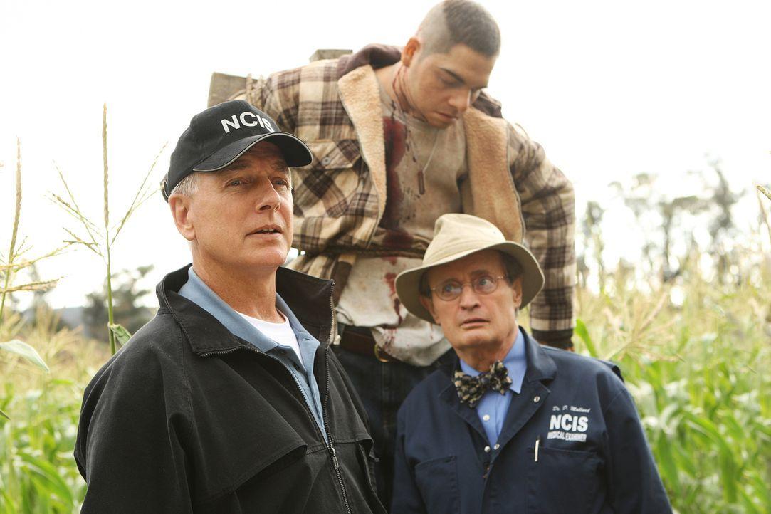 Zwei kleine Jungen finden in einem Maisfeld die Leiche eines Marine Corporals. Gibbs (Mark Harmon, l.) und Ducky (David McCallum, r.) beginnen mit d... - Bildquelle: CBS Television