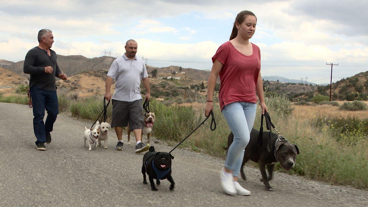 Cesar (l.) erhält einen Hilferuf von einer verzweifelten Familie. Das Zusammenleben der Familie mit ihren fünf Hunden funktioniert einwandfrei, bis... - Bildquelle: NGC/ ITV Studios Ltd
