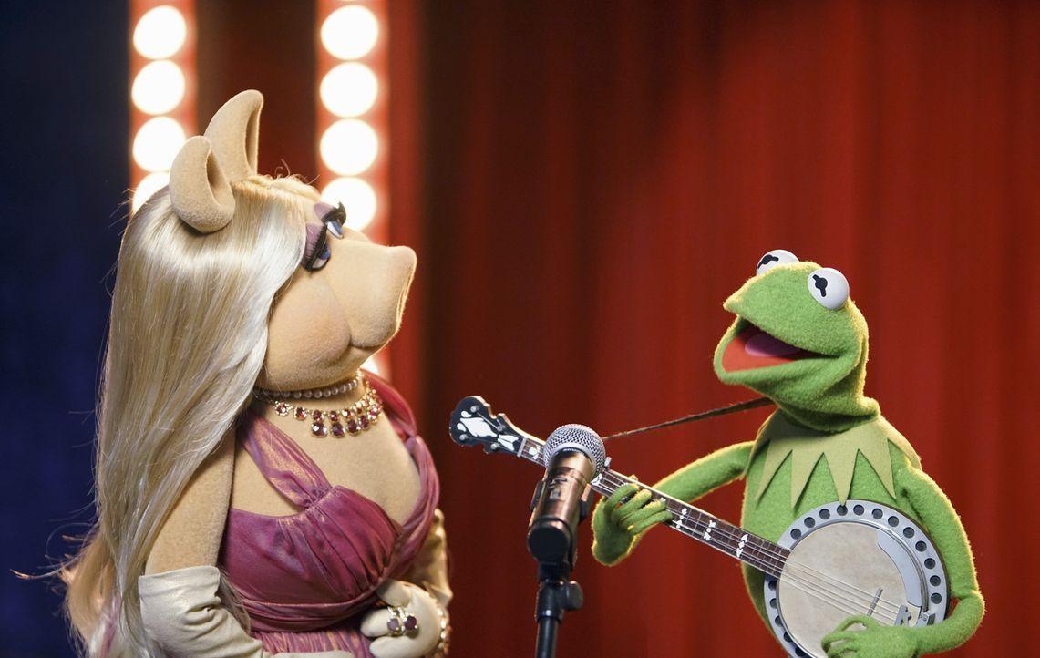 Werden sie es schaffen, die Show ohne Pizza aufzupäppeln? Miss Piggy (l.) und Kermit (r.) ... - Bildquelle: Andrea McCallin ABC Studios