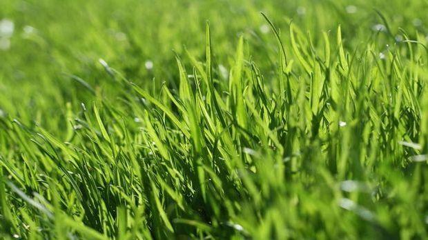 Gräser für den Garten Pixabay