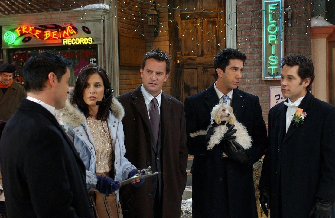 Monica (Courteney Cox, 2.v.l.) nimmt ihre Aufgabe als Hochzeitsplanerin ziemlich erst und geht damit Joey (Matt LeBlanc, l.), Chandler (Matthew Perr... - Bildquelle: 2003 Warner Brothers International Television