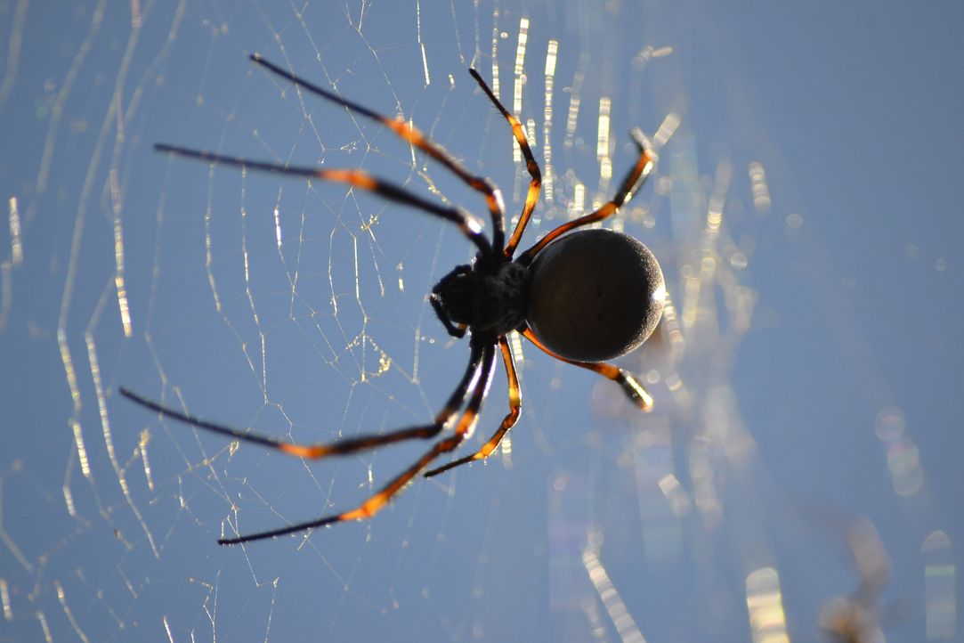 spider-2366970_1920 - Bildquelle: Pixabay