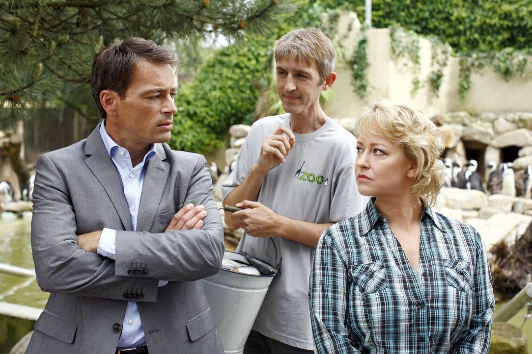 Sonja (Floriane Daniel, r.) glaubt, dass Mark (Jan Sosniok, l.) ihr Vertrauen missbraucht hat und hinter den Sabotageakten steckt. Hugo (Andreas Sch... - Bildquelle: Sat.1