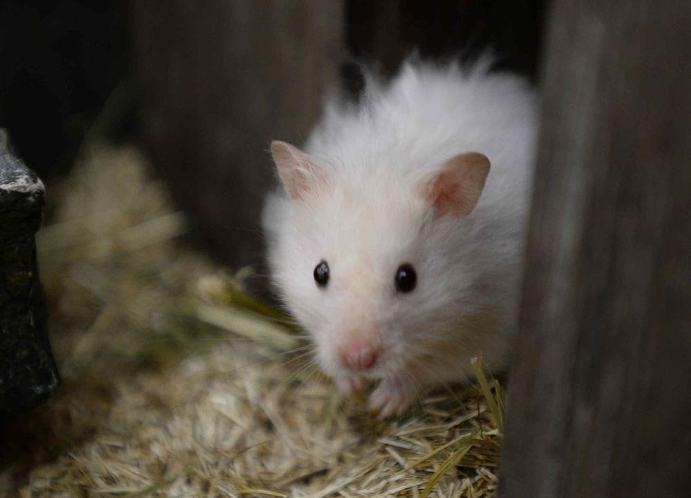 hamster-01 - Bildquelle: Willi Weber/SAT.1