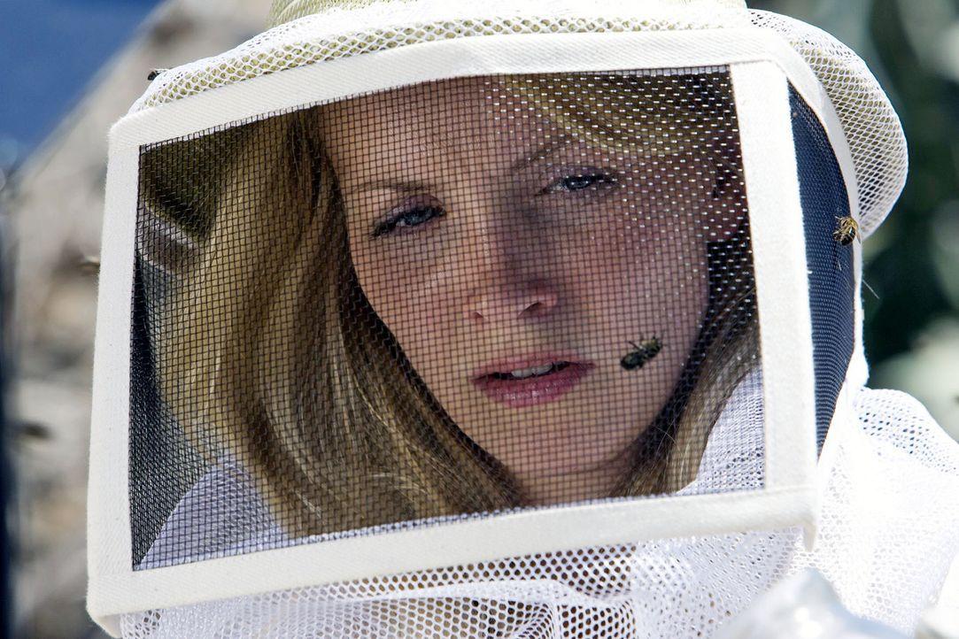 Bei einer verlassenen Imkerei entdecken Karla (Janin Reinhardt) und Ben eine neue Spezies von Bienen. Als Karla feststellt, dass eine der aggressive... - Bildquelle: Olaf R. Benold Sat.1