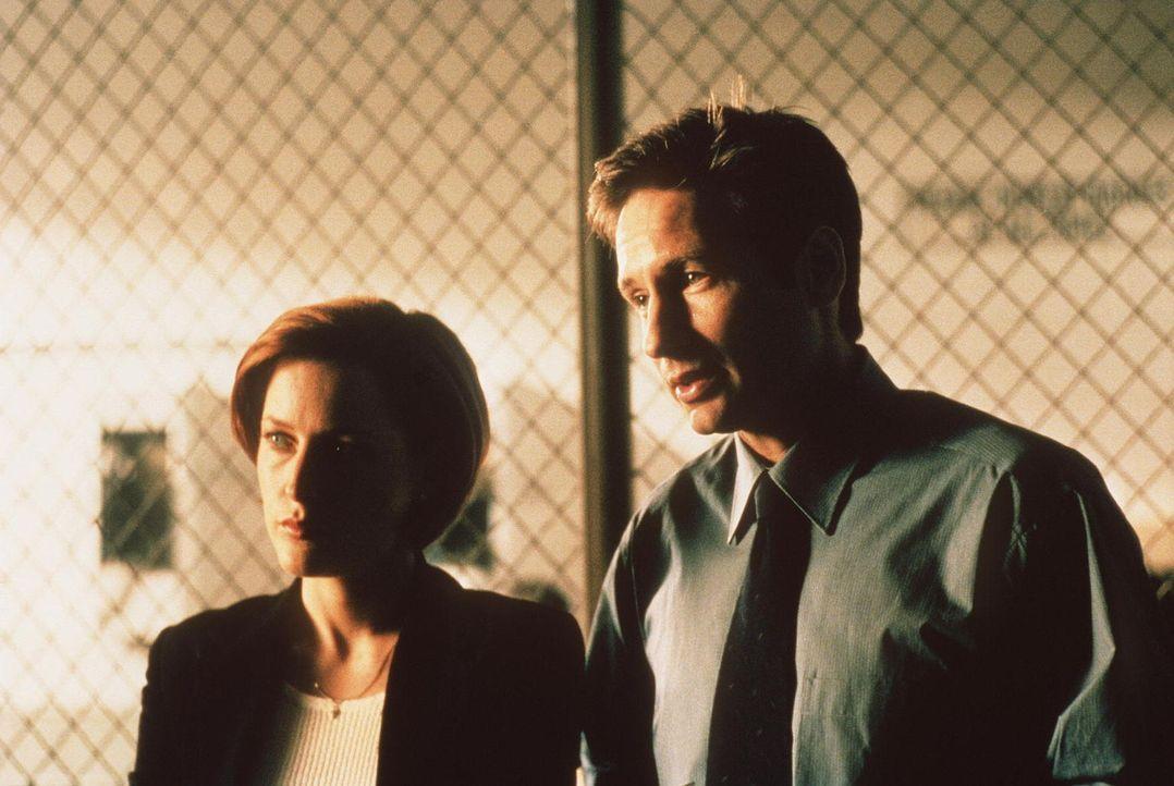 """War der Tod des """"Unglaublichen Maleeni"""" ein Zaubertrick? Mulder (David Duchovny, r.) und Scully (Gillian Anderson, l.) sind der Sache auf der Spur ... - Bildquelle: TM +   2000 Twentieth Century Fox Film Corporation. All Rights Reserved."""