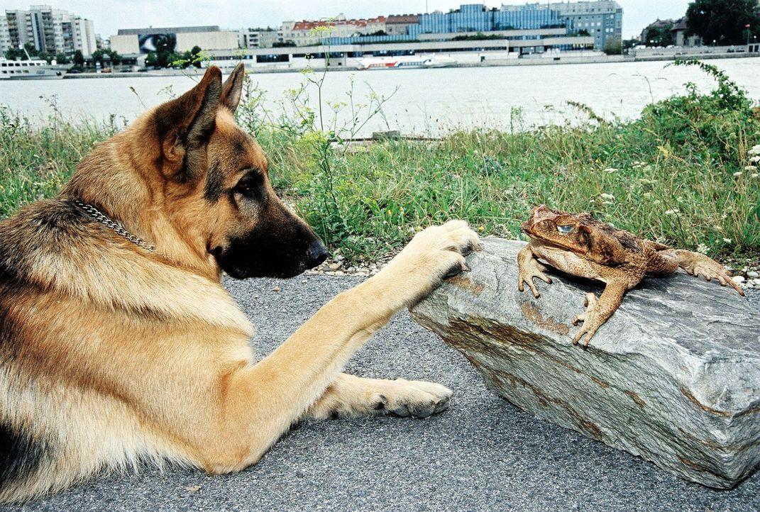 Rex hat am Donauufer eine Entdeckung gemacht ... - Bildquelle: Ali Schafler Sat.1
