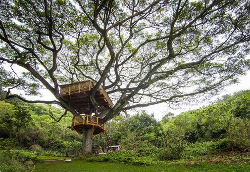 Ein Baumhaus-Traum geht in Erfüllung: Die Treehouse Guys erschaffen in Oahu,...
