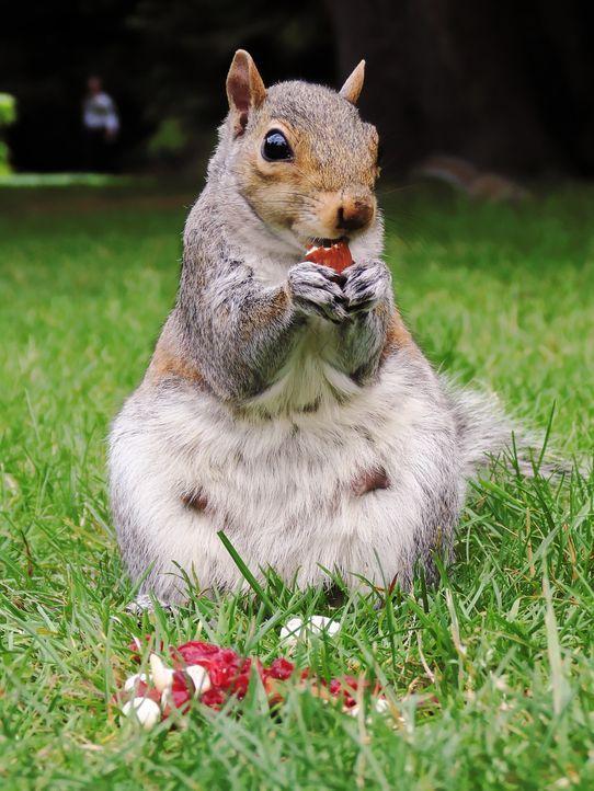 squirrel-580758_1280 - Bildquelle: Pixabay