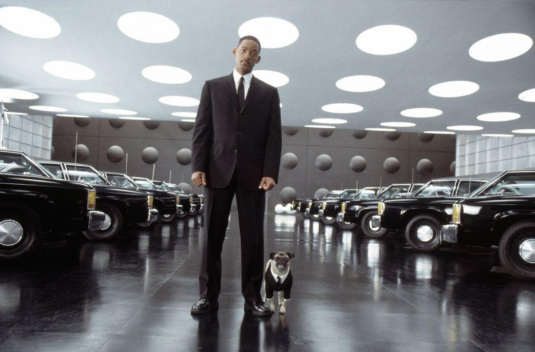 Agent Jay (Will Smith, l.) und Mops Frank (r.) müssen ihre jeweiligen Ex-Partner reaktivieren... - Bildquelle: 2003 Sony Pictures Television International